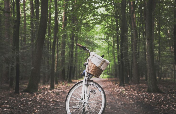 adventure-basket-bicycle-1239460